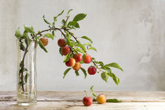 Branch with red wild plums in a glass vase Royalty Free Stock Photos