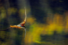 Branch reflected in rendered water. (abstract photography Stock Photos