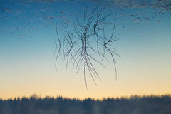 Branch and reflection in water Royalty Free Stock Photos