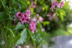The branch of rhododendron in the background of a broken green b stock photography