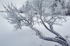 The branch with rime cloudy Stock Photography