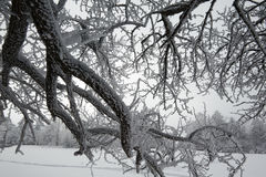 The branch with rime Royalty Free Stock Photos