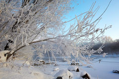 The branch with rime scenery sunrise Royalty Free Stock Photo