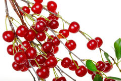 Branch of ripe cherries Royalty Free Stock Photos