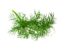 Branch of ripe dill isolated on white Stock Images