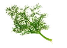 Branch of ripe dill isolated on white Stock Photo