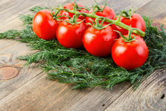 A branch of ripe fresh tomato with water drops and a lot of dill Stock Photos