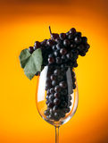 Branch of ripe grapes in a glass of wine Royalty Free Stock Photo