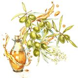 A branch of ripe green olives is juicy poured with oil. Drops and splashes of olive oil. Watercolor and botanical. Illustration isolated on white background stock illustration
