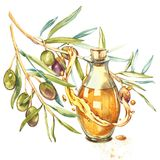 A branch of ripe green olives is juicy poured with oil. Drops and splashes of olive oil. Watercolor and botanical. Illustration isolated on white background royalty free illustration
