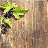 Branch of ripe juicy fragrant black currant on a dark old wooden background. royalty free stock photo