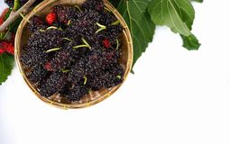 branch of ripe mulberry fruit and mulberry leaf in bamboo basket isolated on white background . stock images