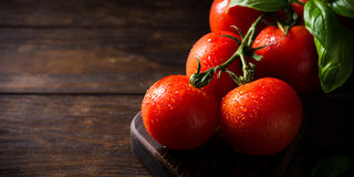 Branch of ripe natural tomatoes and basil leaves Royalty Free Stock Photos