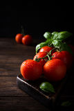 Branch of ripe natural tomatoes and basil leaves Royalty Free Stock Photography