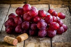 Branch of ripe organic grapes with corks for wine Royalty Free Stock Image