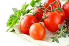 Branch of ripe red tomato with greens and herbs Stock Images