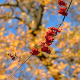 Branch with ripe rowan berries Stock Images