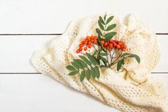 Branch of ripe rowan and white knitted scarf. On white wooden table. Bright autumn composition. Seasonal autumn concept. Copy space Royalty Free Stock Photography