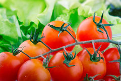 Branch of ripe tomatoes Stock Image