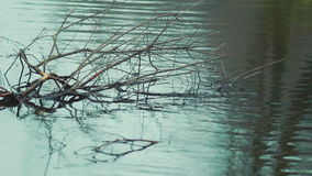 Branch and river waves background. Beautiful branch and dark blue river waves background stock footage