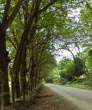 Branch road along trees Royalty Free Stock Photo