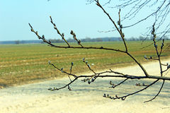 A branch of the road. Spring nature Royalty Free Stock Photo