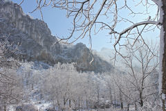 Branch, rocks, snow and sun light Royalty Free Stock Image