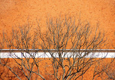 Branch on roof. Branch on the orange roof royalty free stock images