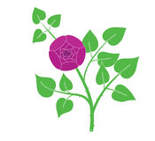 Branch of a rose Stock Photography