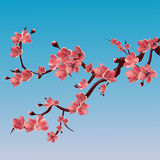 Branch of rose blossoming sakura . Japanese cherry tree. Vector Isolated Illustration Royalty Free Stock Photos