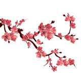 Branch of rose blossoming sakura . Japanese cherry tree. Vector Isolated Illustration on white background Stock Photo