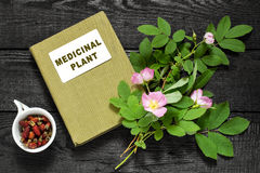 Branch of rose hips, dried briar and directory medicinal plant Stock Photos