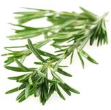 The branch of rosemary Royalty Free Stock Photos