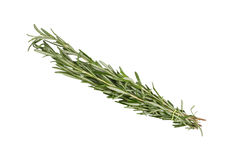 Branch of rosemary close up on white background Royalty Free Stock Image