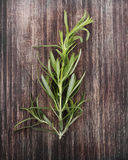 Branch Of Rosemary Royalty Free Stock Photos