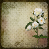 The branch of roses on a vintage background Stock Photo
