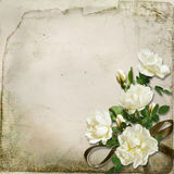 The branch of roses on a vintage background Stock Image