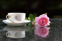 A branch of roses and vintage tea cup. royalty free stock photography