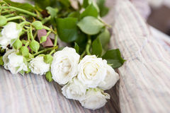 Branch of roses Royalty Free Stock Photos