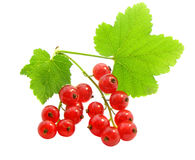 Branch of rype by red currant Stock Photo