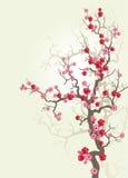 Branch_sakura-02 Stock Photography