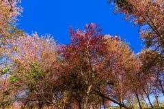 Branch Sakura blooming Stock Photo
