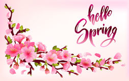 Branch of sakura or cherry blossom. Branch with blooming and leaves on light pink background. Cherry blossom japan spring design with callography hello spring vector illustration