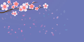 Branch of sakura with flowers. Cherry blossom branch with petals Royalty Free Stock Photo