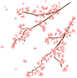 Branch with sakura flowers Royalty Free Stock Image