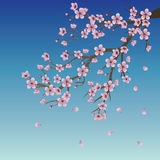 Branch of Sakura over Sky Stock Images