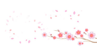 Branch of Sakura and petals flying isolated on white background. Apple-tree flowers. Cherry blossom. Vector EPS 10, cmyk.  Stock Illustration