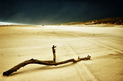 Branch on sand Royalty Free Stock Images
