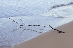 Branch in sand. Stock Photo