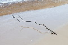 Branch in sand. Stock Image